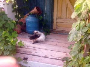 Котята и кошка Соня