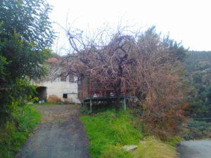 Дерево во дворе