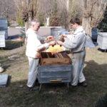 Общинники работают с пчёлами